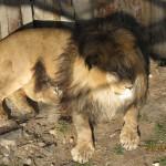 Зоопарк 264