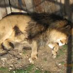 Зоопарк 265