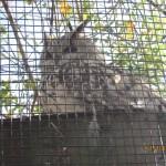 Зоопарк 288