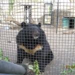 Зоопарк 290