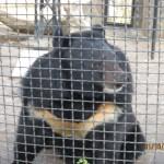 Зоопарк 291