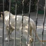 Зоопарк 294