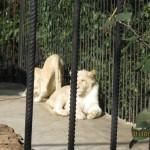 Зоопарк 295