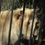 Зоопарк 296