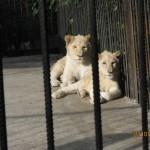 Зоопарк 298