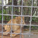 Зоопарк 299