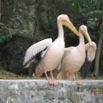 Зоопарк 301