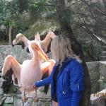 Зоопарк 303