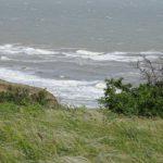 море и зеленая тарва на берегу