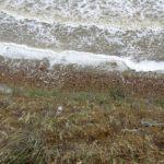 песчаный берег