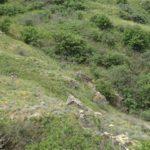 зеленый склон горы