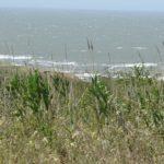 зелень на берегу и море