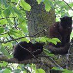 черная кошка на дереве